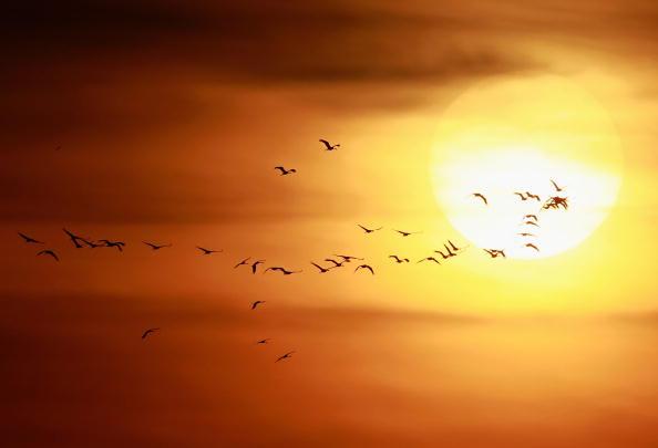 Nature「European Cranes Migrate South」:写真・画像(5)[壁紙.com]