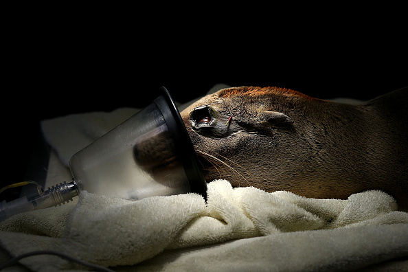 Toughness「Starving Sea Lions Washing Up On California Beaches」:写真・画像(4)[壁紙.com]