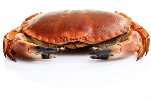 大昔の「Sea crab」:スマホ壁紙(10)