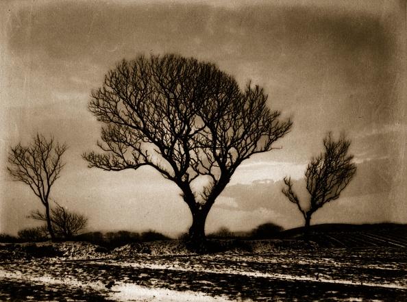 Empty「Three Trees」:写真・画像(17)[壁紙.com]