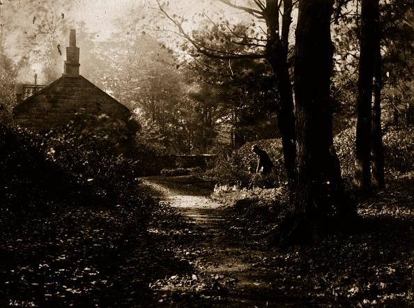 Tranquility「Rural Glade」:写真・画像(12)[壁紙.com]
