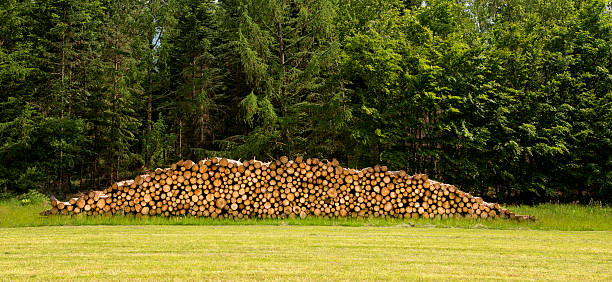 Wood pile at the edge of a forest:スマホ壁紙(壁紙.com)