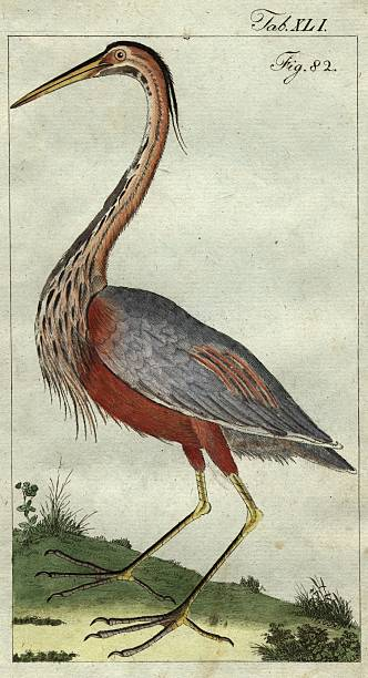 Goliath Heron:ニュース(壁紙.com)