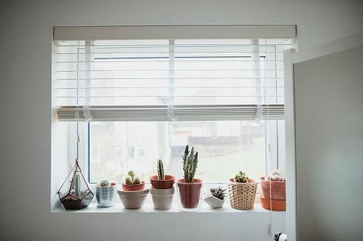 Window Sill「House Plants」:スマホ壁紙(19)