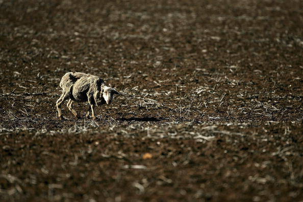 動物「Australia Threatened by Climate Change Outlook」:写真・画像(6)[壁紙.com]