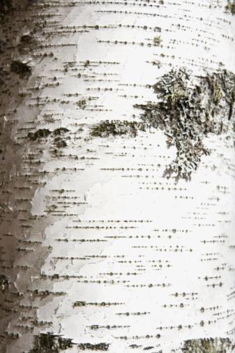 Plant Bark「Birch bark」:スマホ壁紙(18)