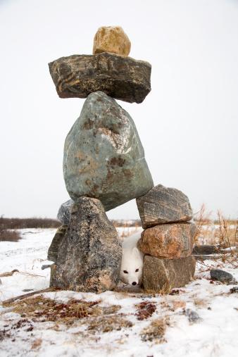 Arctic Fox「Arctic fox peeking through Inuit Inukshuk」:スマホ壁紙(13)