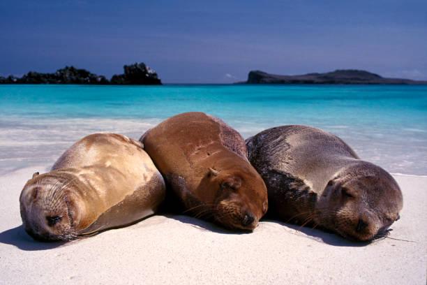Sea lions sleeping on beach:スマホ壁紙(壁紙.com)