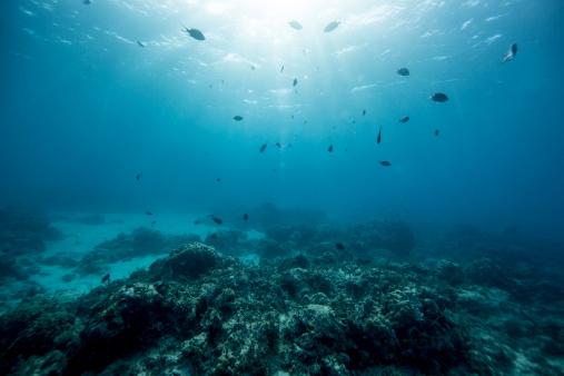 サンゴ「Undersea view of fish with sunlight」:スマホ壁紙(7)