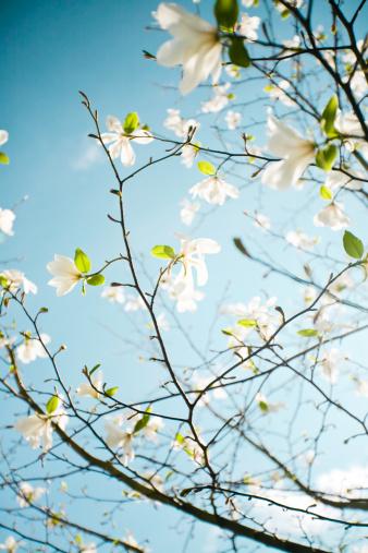 Apple Blossom「Apple blossoms in Hordaland County」:スマホ壁紙(10)