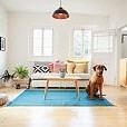 Dog壁紙の画像(壁紙.com)