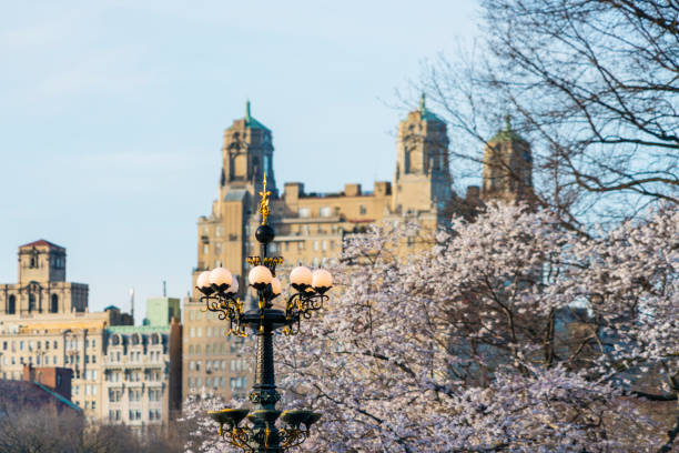 Fountain streetlights just light up on sunset time, which stand in front of Cherry blossoms tree at Central Park New York. Architectures of Central Park West Historic District can be seen behind:スマホ壁紙(壁紙.com)