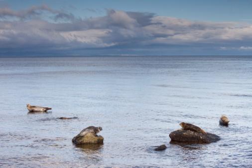 アーラン島「Seals on rocks, Island of Arran, Scotland」:スマホ壁紙(2)