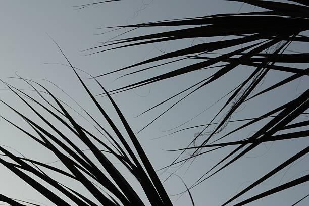 Fronds of palm tree against sky:スマホ壁紙(壁紙.com)
