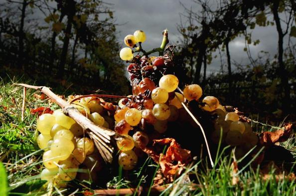 Rotting「Australian Wine Grape Growers Faced With Oversupply」:写真・画像(1)[壁紙.com]