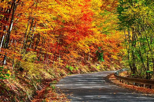 Four Seasons「Road winds through autumn forest, Slovakia」:スマホ壁紙(9)