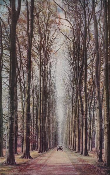 Beech Tree「Holland」:写真・画像(15)[壁紙.com]