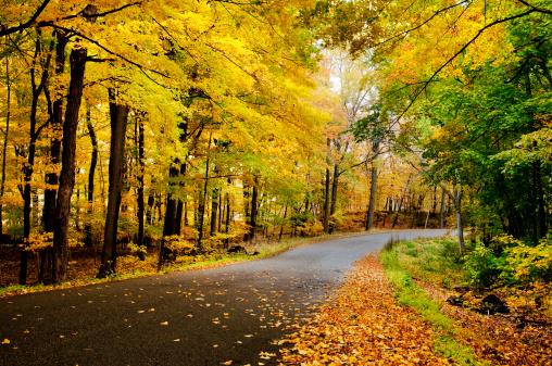 Oak Woodland「Empty country road with fallen autumn leaves」:スマホ壁紙(12)
