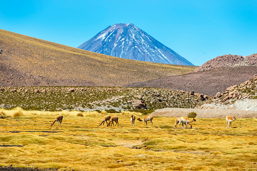Vicuna「Lincabur volcano - Andes Hills - Atacama desert - Chile - Vicuna」:スマホ壁紙(9)