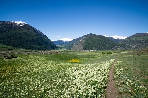 Ötztal Alps「Italy, South Tyrol, Mals, Tartscher Buehel, Hiking path」:スマホ壁紙(19)