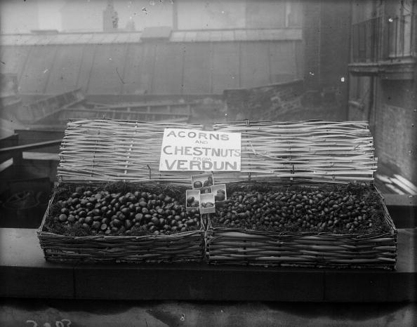 栗「Verdun Nuts」:写真・画像(15)[壁紙.com]
