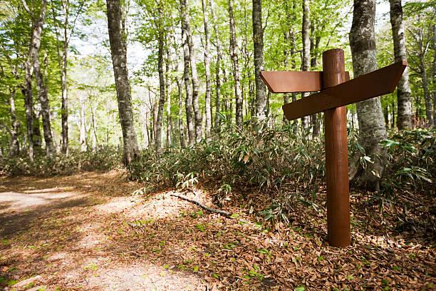 Signpost in a beech forest:スマホ壁紙(壁紙.com)