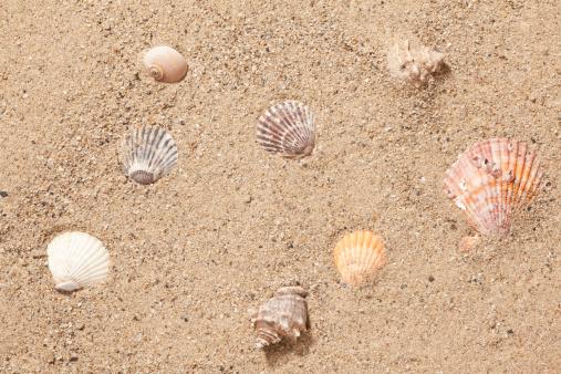 snails「sand and sea shells」:スマホ壁紙(8)