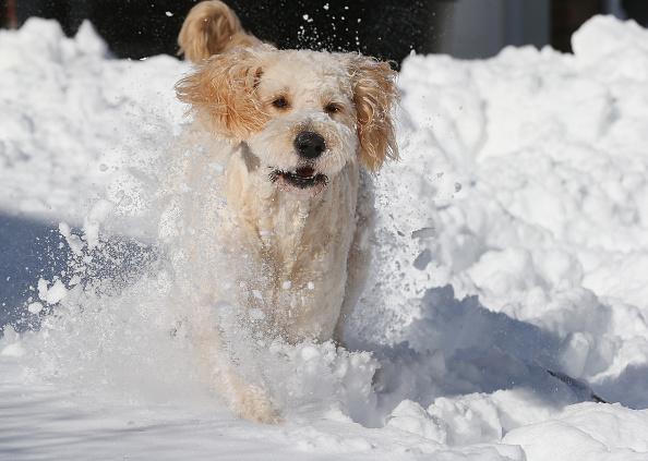2016 Winter Storm Jonas「Dogs Enjoying Winter Storm Jonas」:写真・画像(14)[壁紙.com]