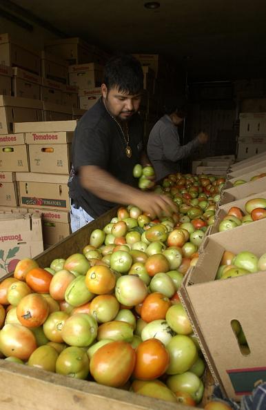 Naples - Florida「Migrant Farmers Pick Produce In South Georgia」:写真・画像(14)[壁紙.com]