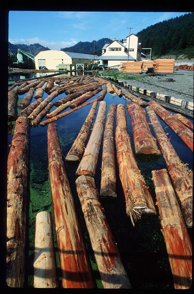 Sequoia Tree「California Redwood Industry」:写真・画像(13)[壁紙.com]