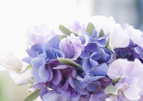 あじさい「Bouquet」:スマホ壁紙(13)