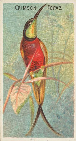 Beak「Crimson Topaz」:写真・画像(7)[壁紙.com]