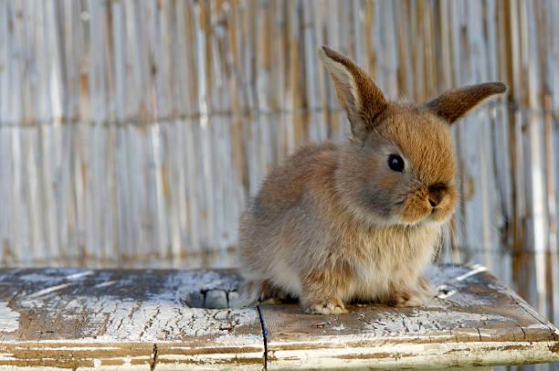 Rabbit on table:スマホ壁紙(壁紙.com)