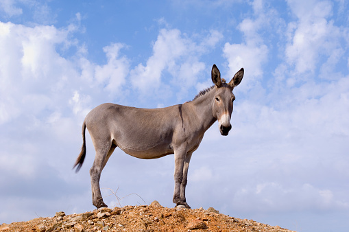 Ass「Donkey Near Kato Meria」:スマホ壁紙(3)