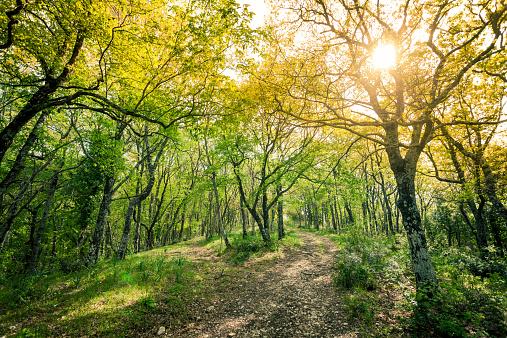 Trentino-Alto Adige「Green Lush Forest in Spring」:スマホ壁紙(11)
