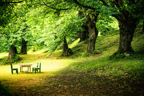 Picnic「Green Lush Forest and Picnic Table」:スマホ壁紙(6)