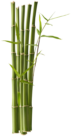 Bamboo - Plant「Bamboo Bunch with Leaves」:スマホ壁紙(14)