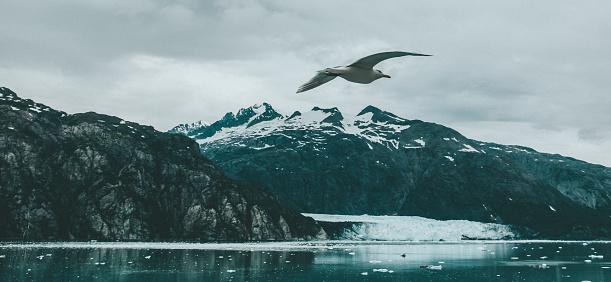 Glacier Bay National Park「Seagull Flying Over Glacier Bay National Park and Preserve, Alaska」:スマホ壁紙(18)