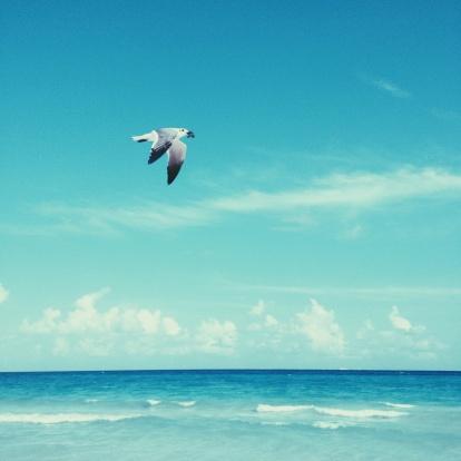 画像加工フィルタ「フライングブルーの海にカモメ」:スマホ壁紙(16)
