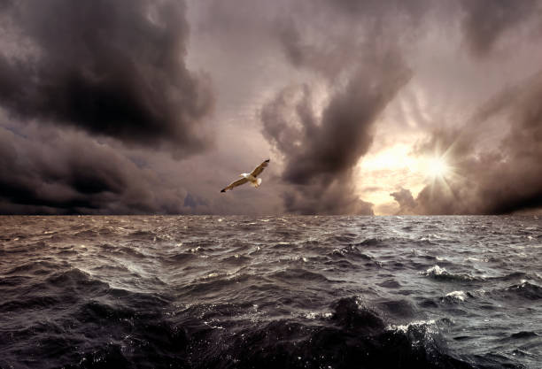 seagull flying over sea and stormy sunset sky:スマホ壁紙(壁紙.com)