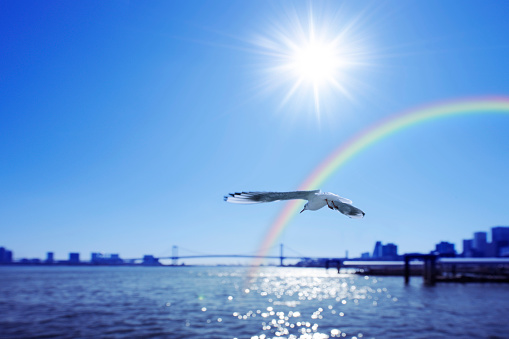 虹「Seagull flying around harbour and a rainbow, Chuo-ku, Tokyo, Japan」:スマホ壁紙(4)