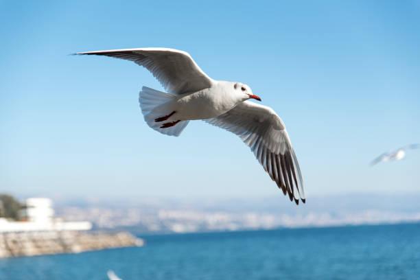 Seagull flying over the ocean:スマホ壁紙(壁紙.com)