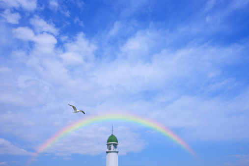 虹「Seagull flying , Yokohama, Kanagawa Prefecture, Honshu, Japan」:スマホ壁紙(2)