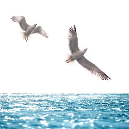 Mediterranean Sea「seagull flying over sea」:スマホ壁紙(15)