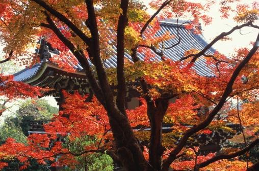 Japanese Maple「Yoshimine-dera Temple, Kyoto Prefecture, Japan」:スマホ壁紙(2)