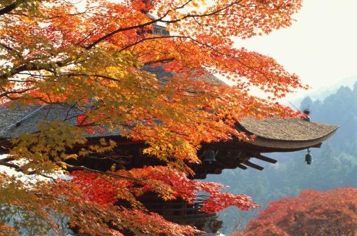 Japanese Maple「Yoshimine-dera Temple, Kyoto Prefecture, Japan」:スマホ壁紙(0)