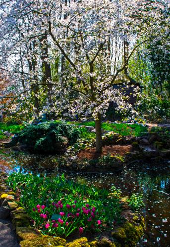 キューケンホフ公園「Spring time has arrived at Keukenhof Gardens」:スマホ壁紙(1)