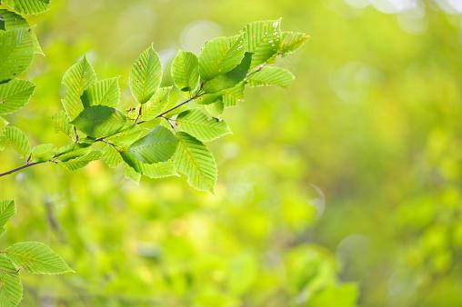 Lush Foliage「Spring time」:スマホ壁紙(8)
