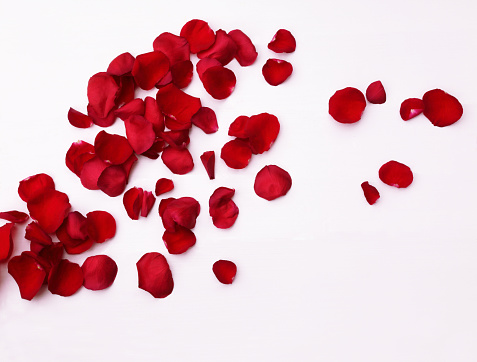 薔薇「Scattered fragrant red rose petals on white.」:スマホ壁紙(8)
