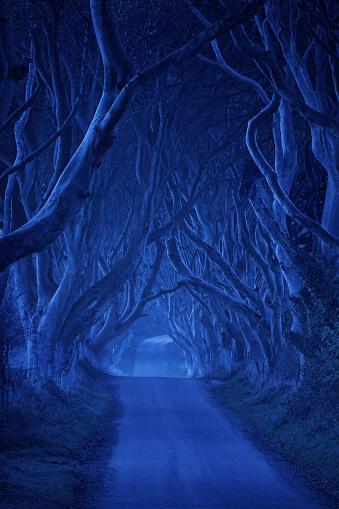 Treelined「treelined road in the night」:スマホ壁紙(16)